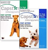capster flea treatment flea control pill for dogs and cats