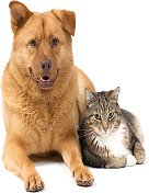 cat and dog diabetes pets