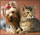 cat behavior on prednisone