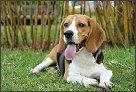 tramadol dosage dogs osteoarthritis pain